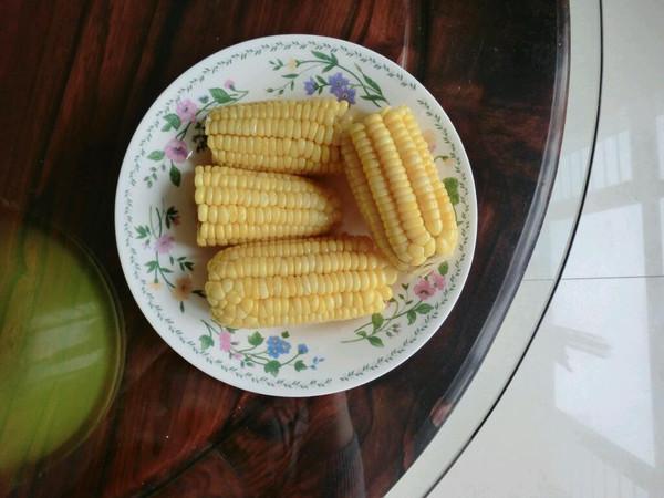 玉米表皮结构图